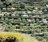 Foto: de Aitana y Bèrnia a la Serra Gelada por tierra de moriscos