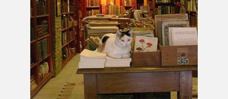 Libreria con encanto