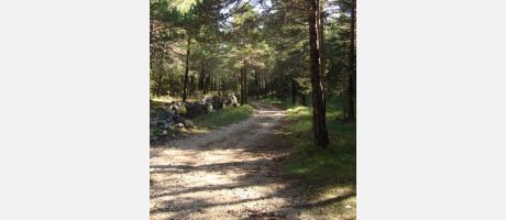 Img 1: Excursión por las sendas del Paraje Natural Municipal de Palomita de Vilafranca.