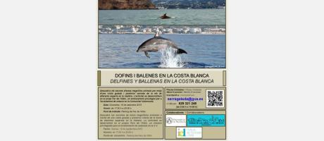 Delfines y Ballenas en la Costa Blanca