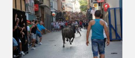 Vaca Castalla