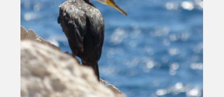 Calp_Turismo_ornitológico_Img5