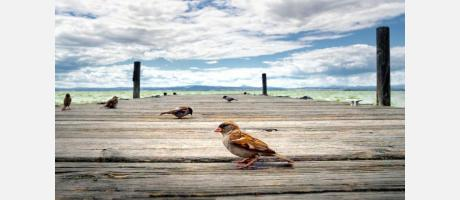 Birdwatching en el Tancat de Milia de Sollana