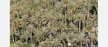 El Palmeral de Elche a vista de pájaro