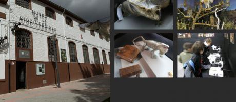 Museo de la Biodiversidad ( por fuera )