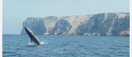 Ballenas Costa Blanca