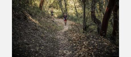 Marató dels Dements 2