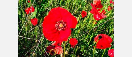 Flores  Comunitat Valenciana