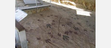 dinosaurios en la Comunitat Valenciana 5