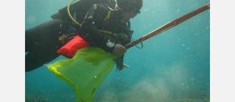 Nettoyage subaquatique à la côte de Benissa