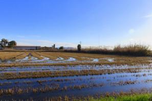 Rutas inclusivas turísticas. Campo de arroz en Valencia