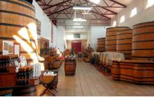 Museo del Vino. Legado de Bacchus
