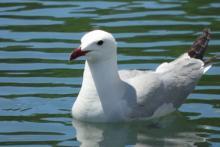 Tourisme ornithologique dans la Région de Valencia avec Actio Birding
