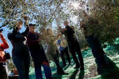 AgriCulturalTours_Valencia_Img1.jpg
