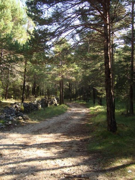 Excursión por las sendas del Paraje Natural Municipal de Palomita de Vilafranca.