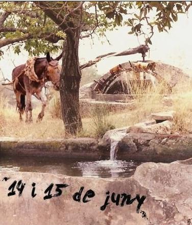 Fira del Cavall en Vilanova d'Alcolea