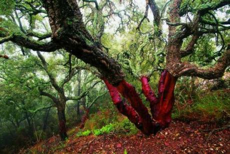 Parques naturales valencianos, más divertidos en mayo