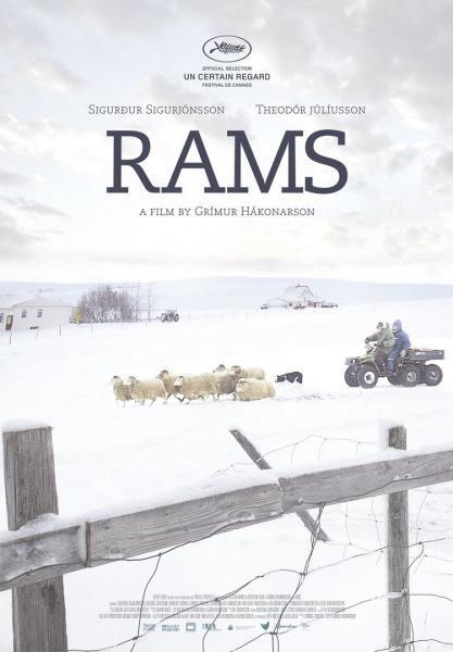 Cine: Hrutar (Rams. El valle de los carneros)