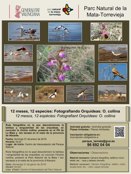 Fotografiando Orquídeas en el Parque Natural de La Mata-Torrevieja