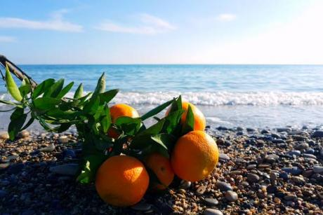 La Plana Baixa cooks a l'orange