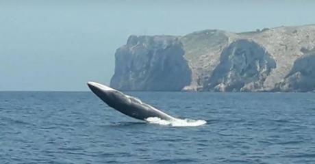 How to Spot Whales and Dolphins in the Costa Blanca
