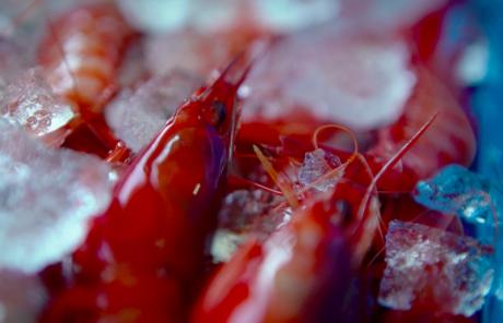 La Gamba Roja de Dénia, una joya del Mediterráneo