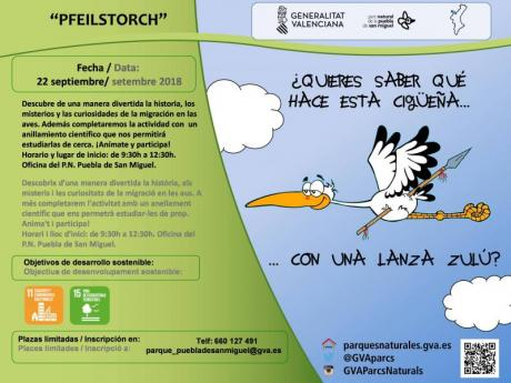 PFEILSTORCH. Anillamiento científico en época de migración