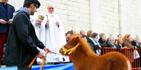 Fira i Porrat de sant Antoni Benissa (Feria)