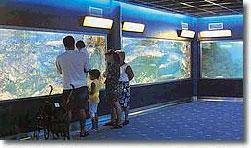 Municipal Aquarium of Santa Pola