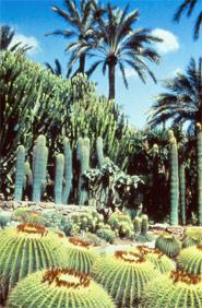 """Garten Des """"Cura"""" ( in der Gesamtheit des Palmengarden eingeschloßen)"""