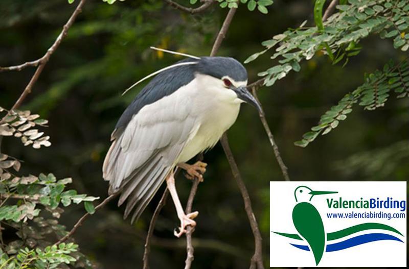 València Birding