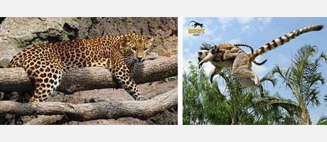 Imágenes de animales en el Bioparc Valencia