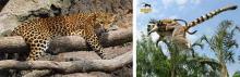 Bioparc Valencia, espacio para los animales