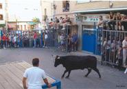 Festes de Vaca