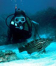 Scuba Diving Benidorm