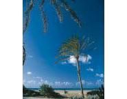 North Beach (Playa de la Pobla de Farnals)
