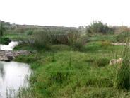 Paisaje Protegido de la Desembocadura del Riu Millars