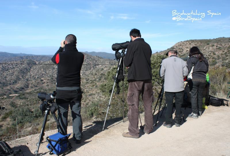 Birdwatching Spain