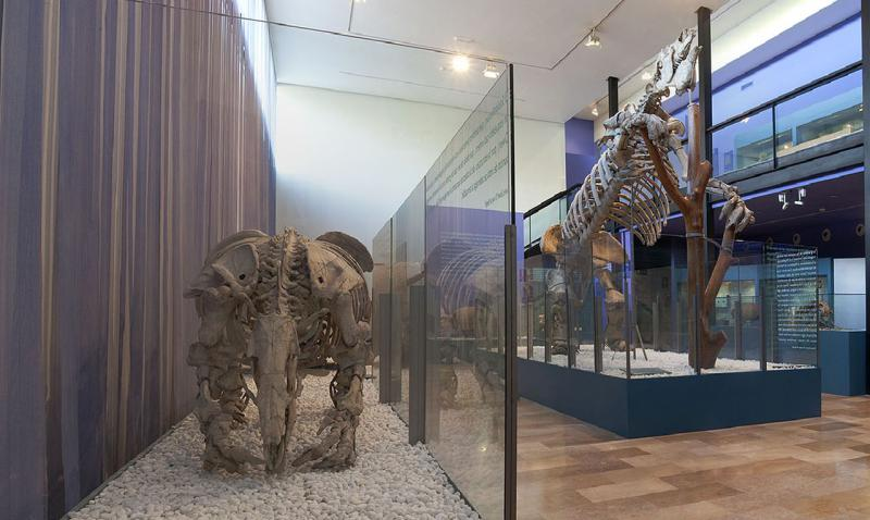 The Natural Sciences Museum (Paleontological Museum)