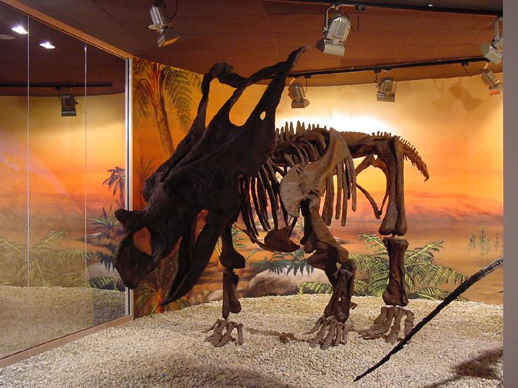 Museo Paleontológico Mupe